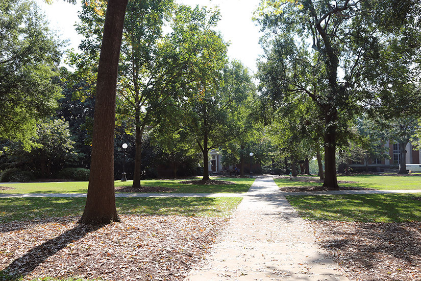 Tree-lined walkway along North Campus in late summer